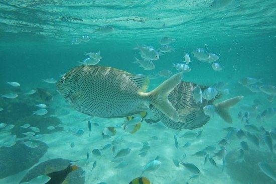Kurumba Maldives: spot fish