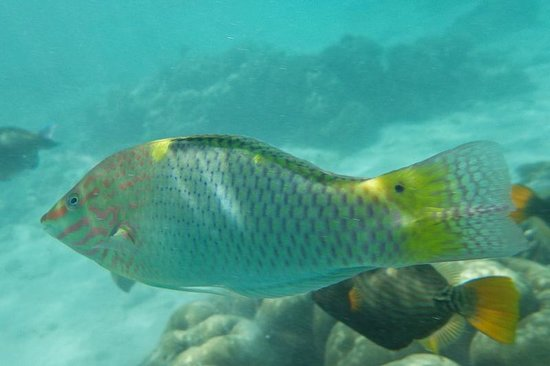 Kurumba Maldives: the colourful