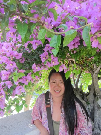 Garden of Gethsemane: The bougainvillea is so lush here - gorgeous!