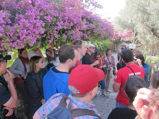 Garden of Gethsemane : Listening to our tour guide next to the bougainvillea