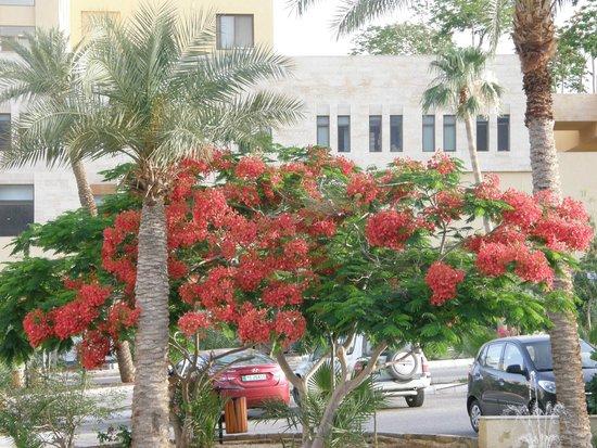 Dead Sea Spa Hotel Resort: View from hotel entrance of garden area