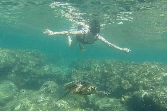 Kauai Guided Tours Snorkeling At Tunnels Beach