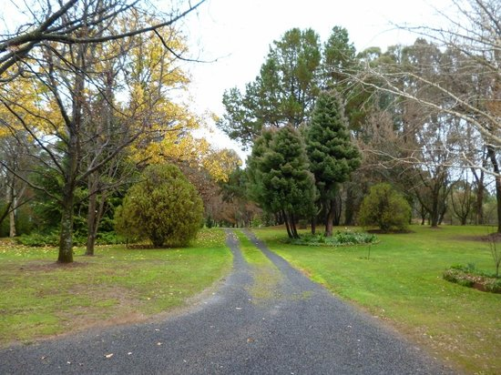 Clifton Gardens Bed & Breakfast : Driveway