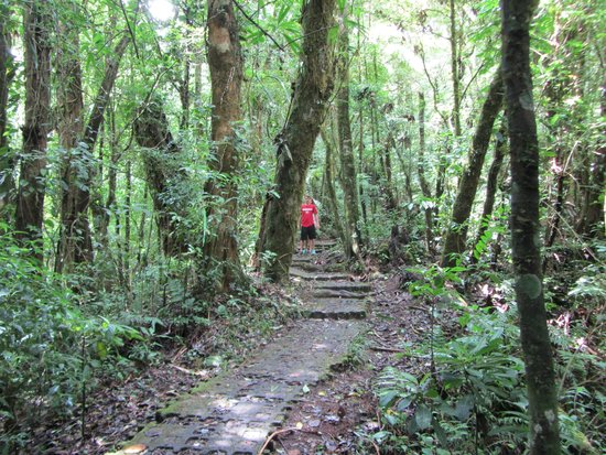 Monteverde Cloud Forest Biological Reserve: trail to waterfall