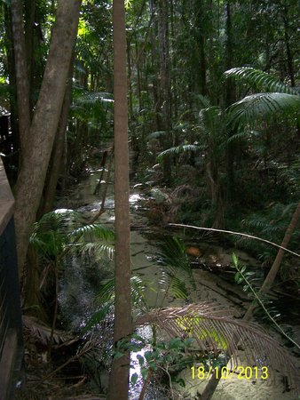 Fraser Experience Tours: Rainforest