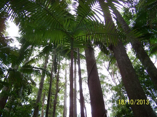 Fraser Experience Tours: Tall trees in the rainforest