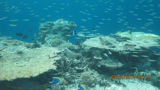 Lily Beach Resort & Spa : Бурлит подводный мир.