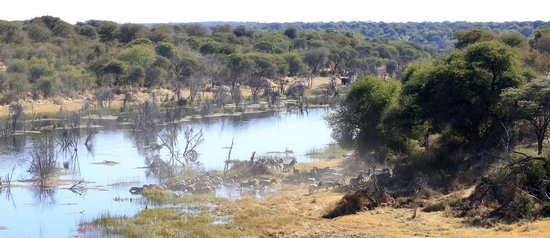 Meno a Kwena Tented Camp: view from the camp