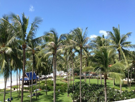 Centara Grand Beach Resort Samui : บรรยากาสดี เต็มไปด้วยต้นมะพร้าว