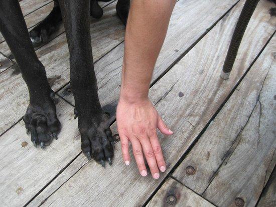 Ocean Grill Restaurant & Beach Club: Wilson's paws