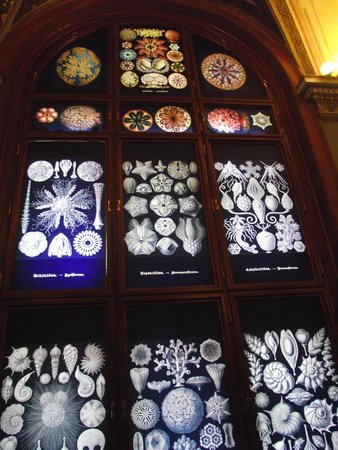 Muséum d'histoire naturelle de Vienne : Haeckel drawings on the windows.