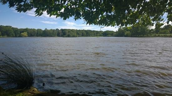 Richmond Park: Picknick am See