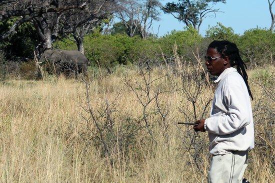 Camp Okavango : Obed our guide