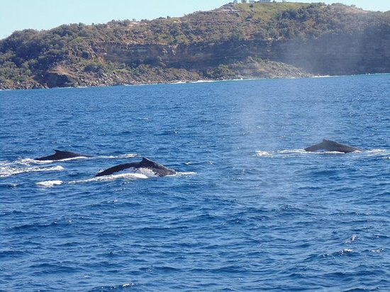 Brisbane Whale Watching: Honored by Whale encounter