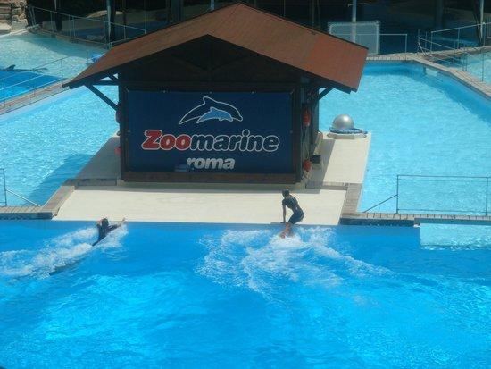 Zoomarine : Piscina delfini