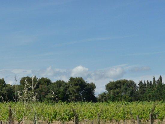 Ile Saint-Honorat: paysage