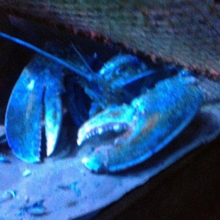 Sea Life Blackpool : Lobster