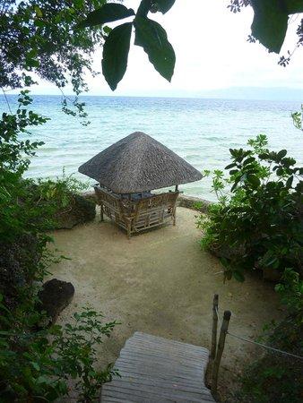Sea Turtle House Moalboal: beach