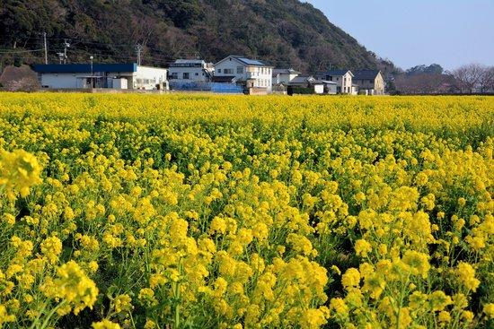 Tempat persinggahan Shimkamo Onsen Yonohana