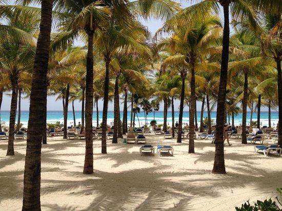 Hotel Riu Palace Riviera Maya: Tumbonas en el palmeral