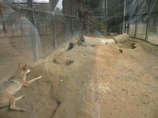 Beijing Zoo: Honteux!!