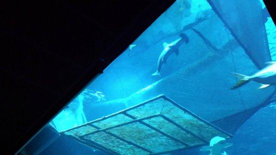 Aquarium de Paris - CineAqua : Aquarium Trocadéro