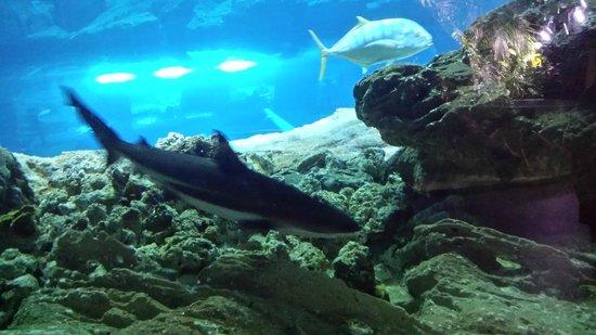 aquarium trocad 233 ro picture of aquarium de cineaqua tripadvisor