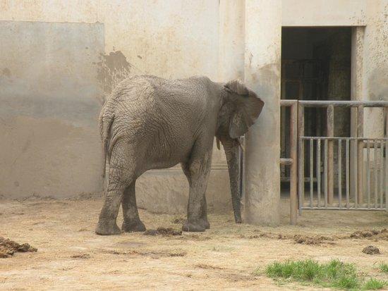 Beijing Zoo: Pauvres bêtes