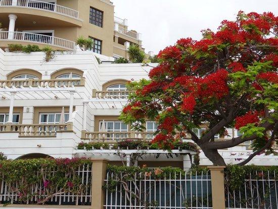 Hotel picture of jardines de nivaria adrian hoteles costa adeje tripadvisor - Hotel adrian jardines de nivaria ...