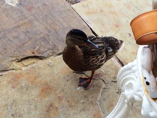 Alton Towers Hotel: Meet my new friend