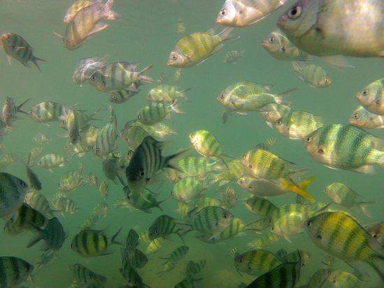 Koh Wai Pakarang Resort : Fische am Pier