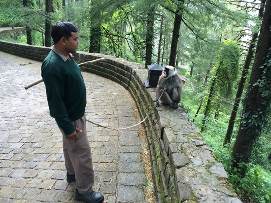 Wildflower Hall, Shimla in the Himalayas: Their pet langoor to chase away monkeys