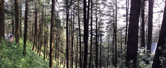 Wildflower Hall, Shimla in the Himalayas: A scene around the property