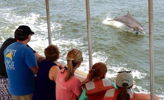 Captain Mike's Dolphin Tours : dolphin following the tour boat