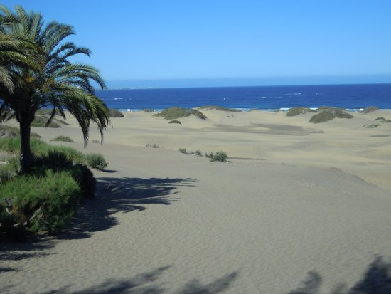 IFA Interclub Atlantic Hotel : dunes maspalomas