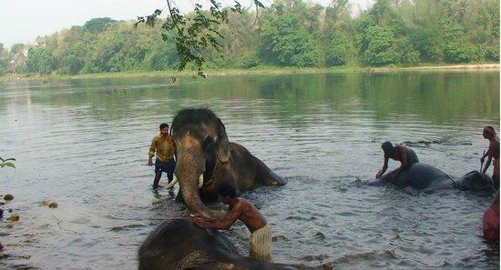 Kodanand Elephant Training Centre : KODANAD