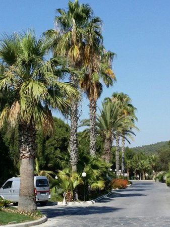 Pine Bay Holiday Resort: club eintritt