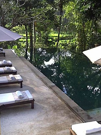 Komaneka at Monkey Forest : Serene pool