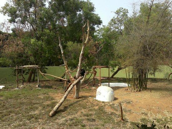 Sri Chamarajendra Zoological Gardens,Mysore Zoo: Chimp...
