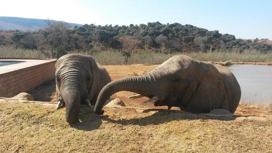 Dining at Askari Game Lodge: Special having these beautiful creatures so close