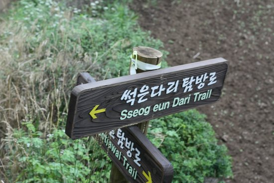 Y Resort Jeju: Hiking trail right next to the hotel