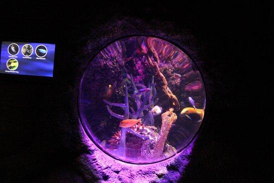 Sea Life Manchester: One of the aquarium