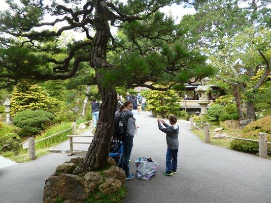 Entr e du jardin japonais dans le parc du golden gate for Ca vient du jardin