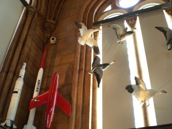 Smithsonian Institution Building: Exhibit - birds, space ships