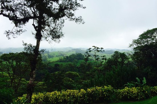 Villa Blanca Cloud Forest Hotel and Nature Reserve: The view from the patio of Casita #16