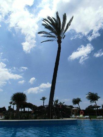 Precise Resort El Rompido - The Apartments : le palmier de la piscine