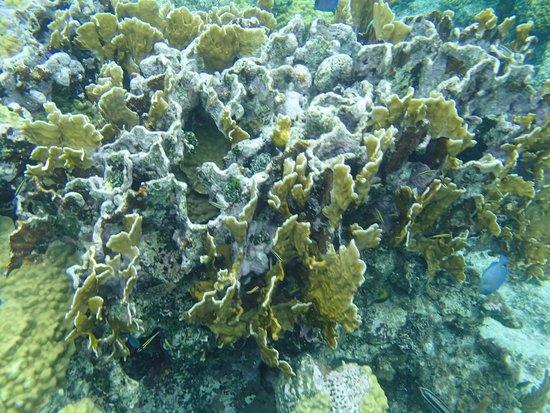 Bahamas Ocean Safaris: Snorkeling on the Reefs