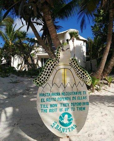 Las Ranitas Eco-boutique Hotel : Protect the turtles!