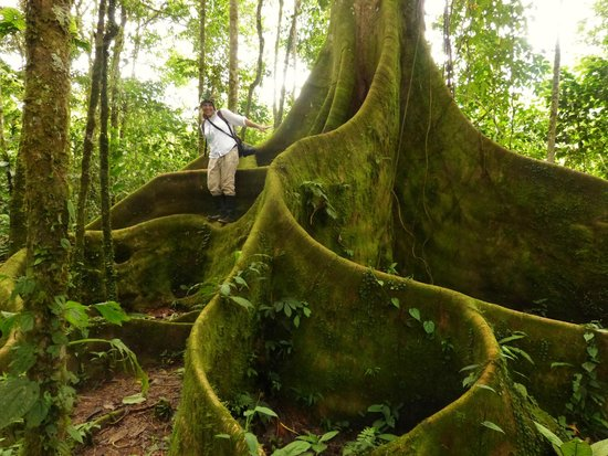 Sacha Runa Jungle Lodge : Dschungeltour