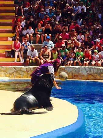 Mundomar : The sea lion show